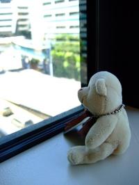 The_bear_001