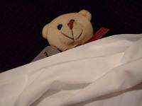 The_bear_002