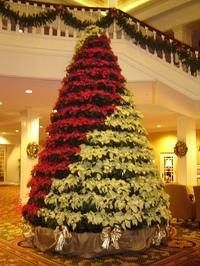 Poinsetta_tree